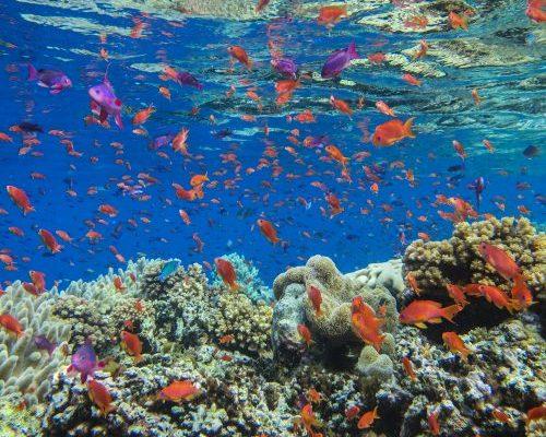 Daku Resort - Diving in Fiji