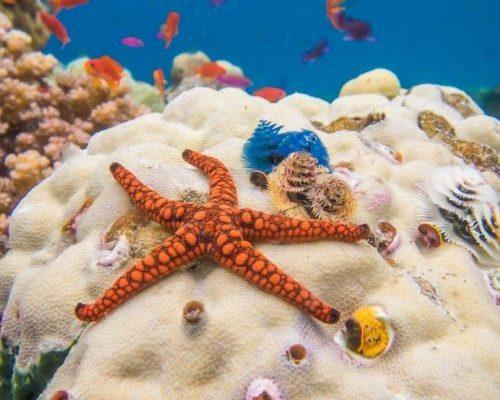 Daku Resort - Diving in Fiji Ocean Ventures