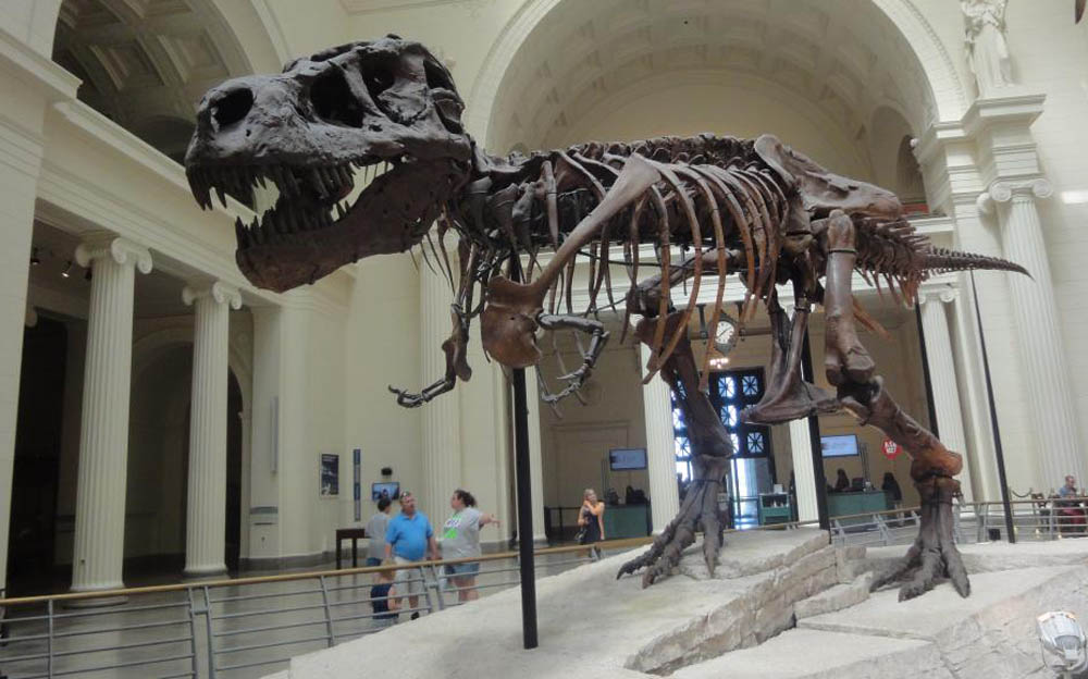 Sue, the T-Rex at the Field Museum, Chicago.