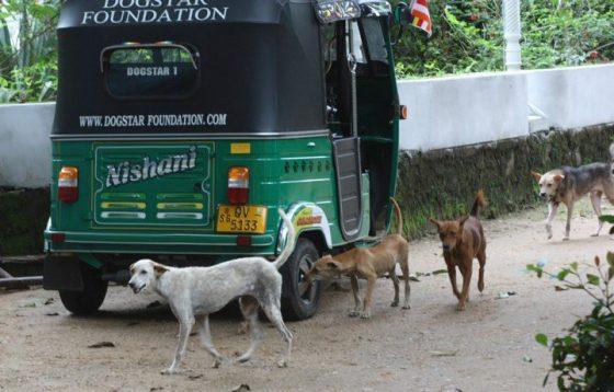 Dogstar Foundation - Pippa