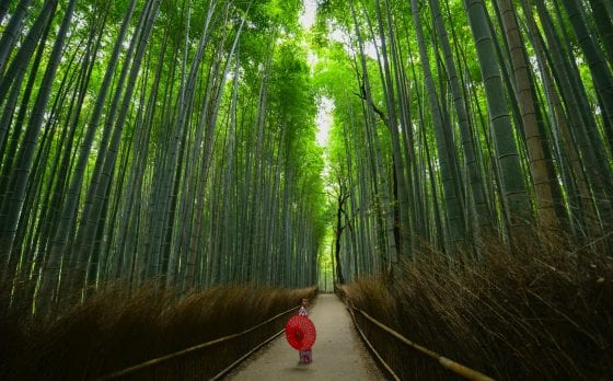 Bamboo Forest – Arashiyama, Kyoto, Japan