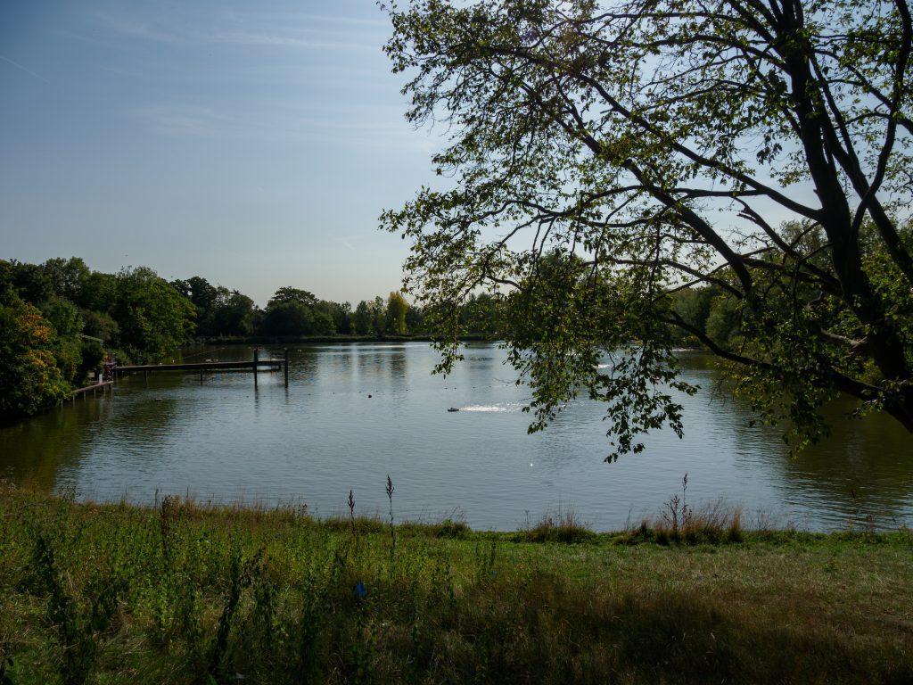 Hampstead Heath ponds by Brett Jordan, Unsplash